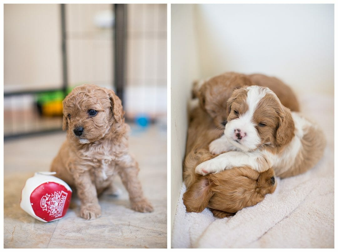 Our Puppy Journey